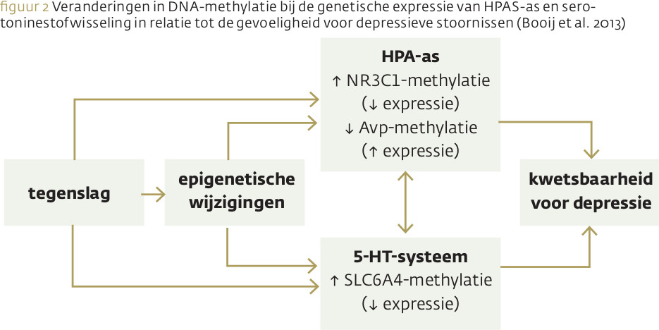 DNA-methylatie